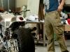 georg-friedrich-harley-v-rod-cafe-racer-dr-mechanik-16